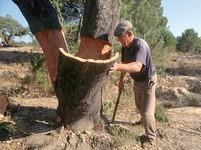 Portugalsko se mění v poušť pomohou korkové duby