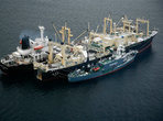 Velrybářská loď Nisshin Maru