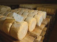 Výroba sýru niva