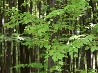 Lesy - ilustrační foto
