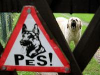 Pozor pes!