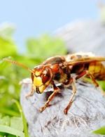 Kr�sa hmyzu