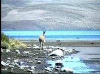 jezero Chungara
