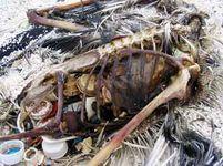 Pacifik ekologie znečištění