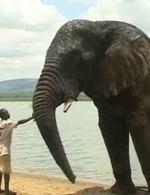 Slon se slon� pam�t�