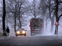 Inspekce zastavila kácení alejí u silnic