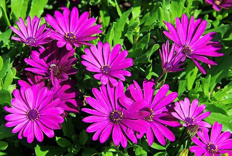15 jarních květin, které se hodí na balkon i terasu - Grafiky ...