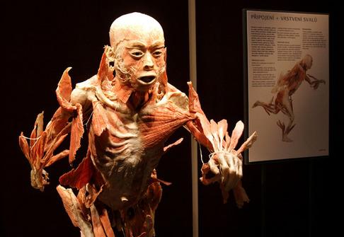 http://img.aktualne.centrum.cz/79/10/791037-vystava-bodies-v-praske-lucerne.jpg