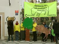 Greenpeace protestují proti kácení Bělověžského pralesa.
