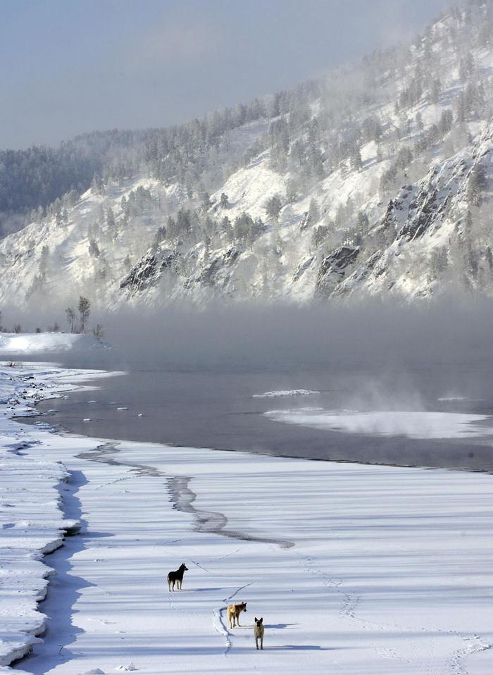 A ještě jednou psi. Tito se nacházejí na zamrzlé řece Jenisej poblíž sibiřského Krasnojarsku. Teplota v této části Ruska klesla pod minus třicet stupňů Celsia.